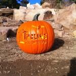 Manitou Incline Pumpkin
