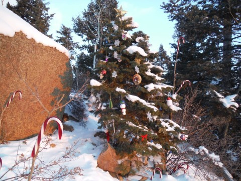 Christmas Tree at Top of Incline